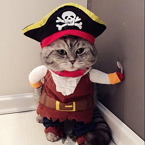 cat-pirate-costume