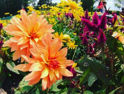 2017 Epcot International Flower & Garden Festival will Bloom this Spring 5