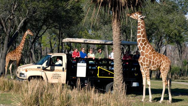 wanyama-resort-safari-and-dinner-05