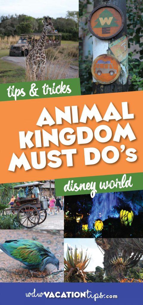 Animal Kingdom Must Dos