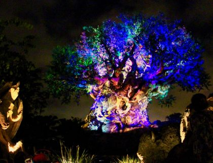 Animal Kingdom Tree of Life at Night