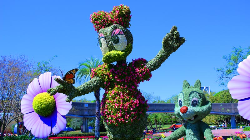 Daisy Epcot Flower and Garden Festival