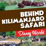 Kilimanjaro Safari is the focal point of Africa at Disney's Animal Kingdom