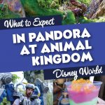 what to expect in pandora disney world