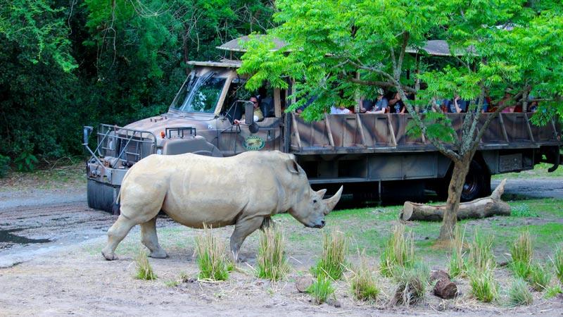 Rhino Disney Animal Kingdom