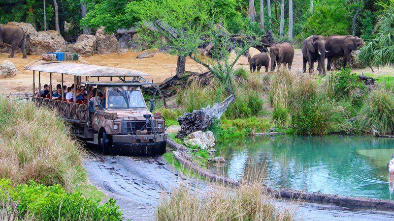 Behind The Scenes Of Kilimanjaro Safari At The Animal