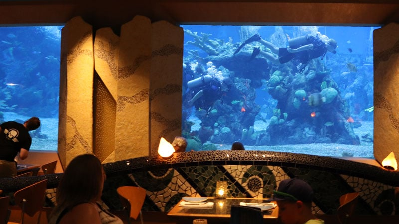Scuba Diving Coral Reef