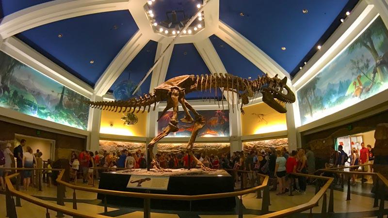 Dinosaur animal kingdom