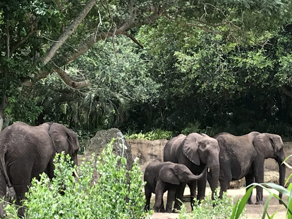 baby Elephant animal kingdom