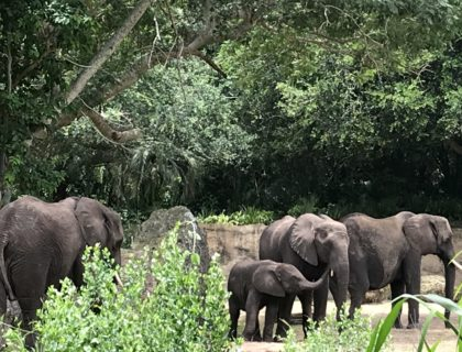Caring for Giants Tour at Animal Kingdom 3