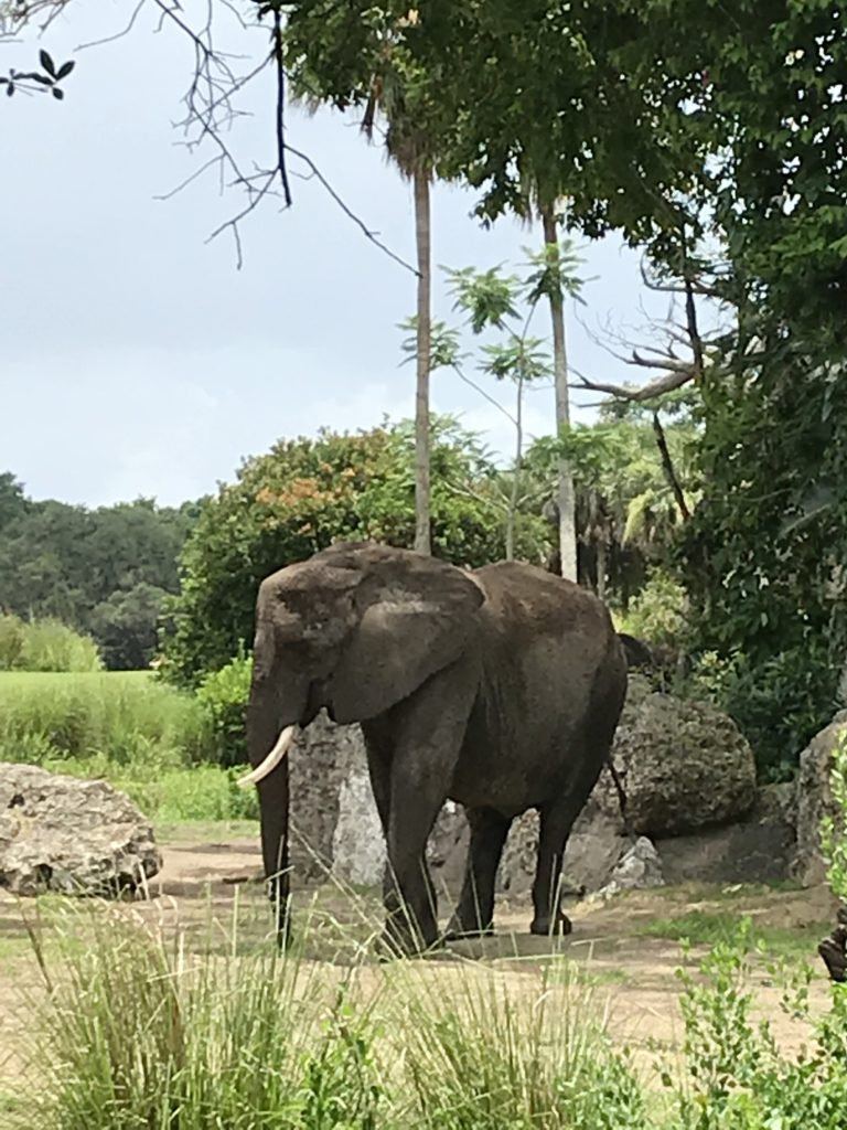 Caring for Giants Tour at Animal Kingdom 8