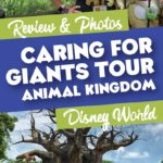 Caring for giants tour