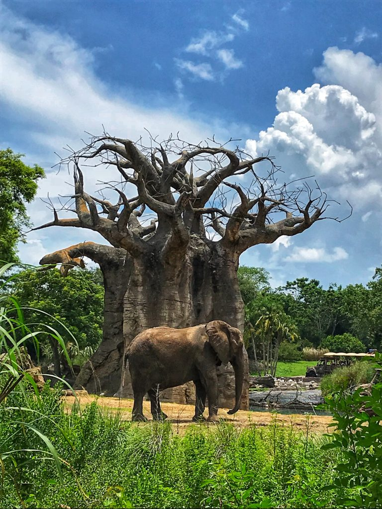 Caring for Giants Tour at Animal Kingdom 7