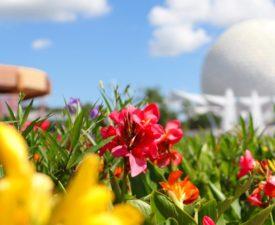 New Half Day Disney World Park Tickets