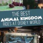 Best Animal Kingdom Rides Disney World