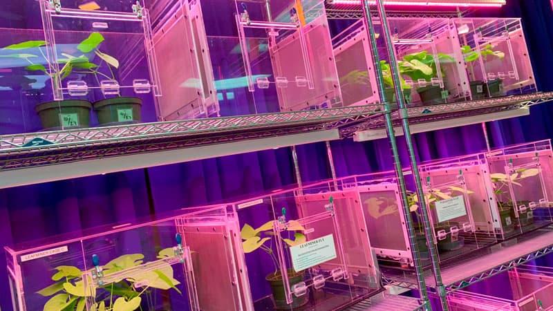 Bug Farms Behind the Seeds Tour