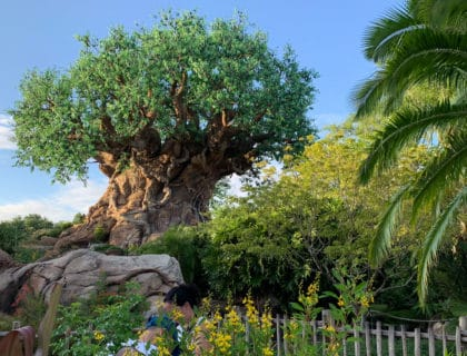 Fun Animal Kingdom Facts 13