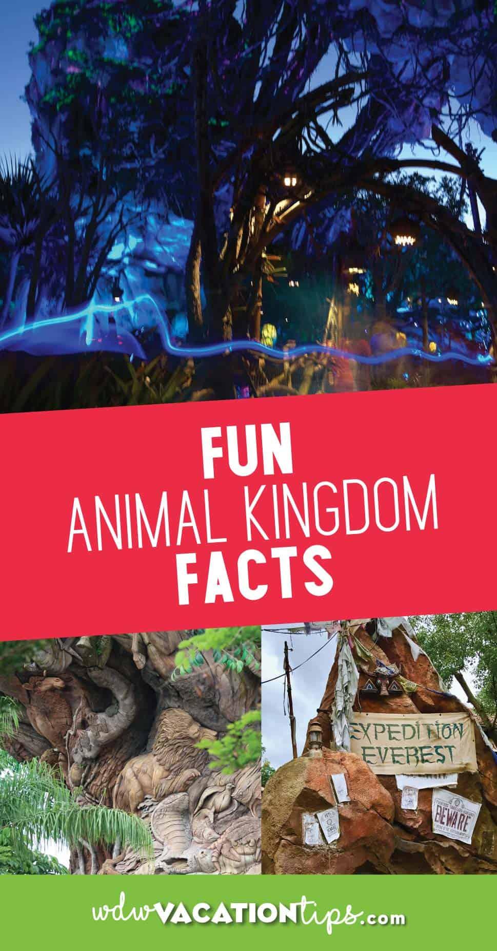 Animal Kingdom Facts