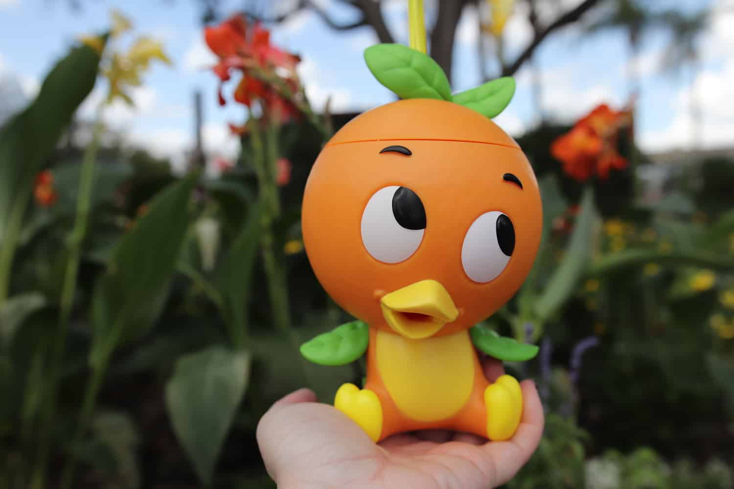 Why the Orange Bird is So Popular 7