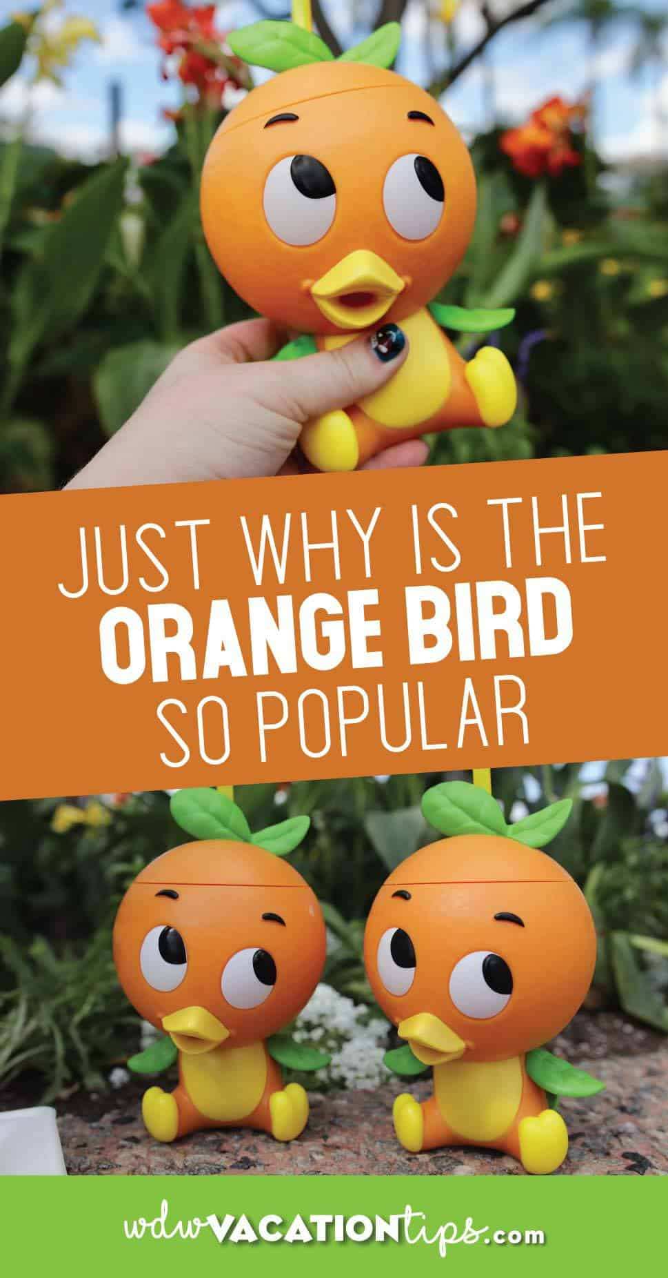 Orange Bird Disney World